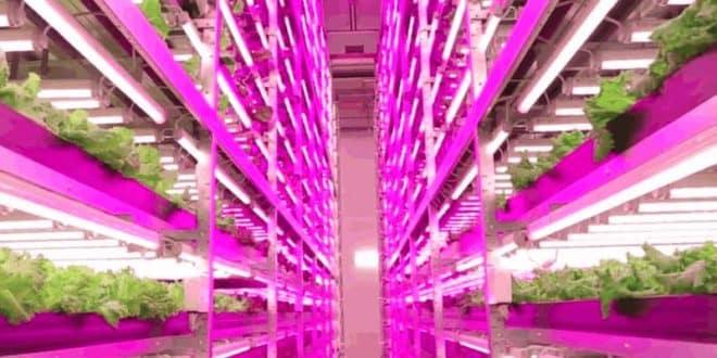 Cosa Fare Lampade A Led Per Coltivazione Indoor Funzionano Galleria Di Lampada Idea
