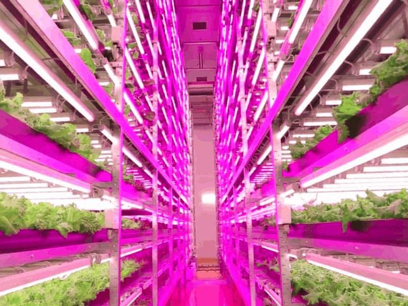 Coltivazione indoor: le lampade led cannabis social club italia