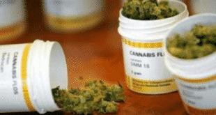 la cannabis arriva nelle farmacie italiane