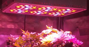 Lampade A Led Per Coltivazione Indoor.Led Per Coltivare Indoor Ecco Perché Sono La Scelta