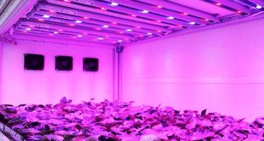 Coltivazione indoor con lampade led ecco tutti i vantaggi